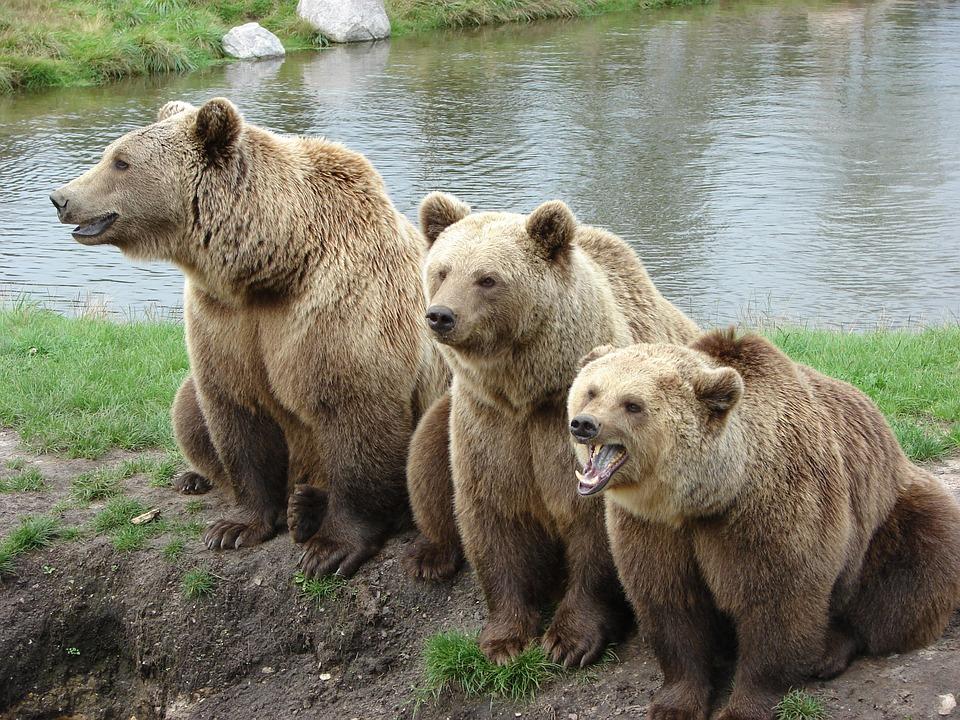 追いかけ られる 夢 熊 に 【夢占い】「熊に食べられる夢」の夢の意味を分かりやすく解説!